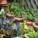 Mon jardin potager sur le balcon